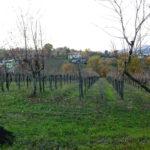 I vini del Sannio nelle principali guide 2017