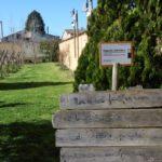 La potatura invernale ad Antica Masseria Venditti