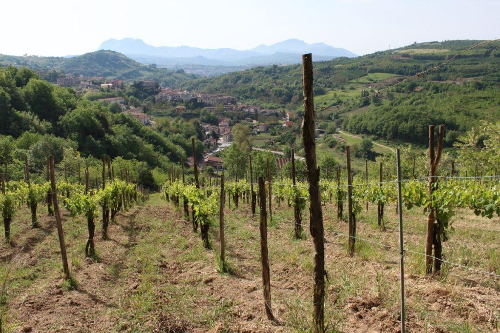 Il vigneto di Torrefavale domina dall'alto il piccolo borgo di Tufo